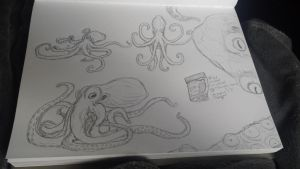 octopi study by CloudClipper