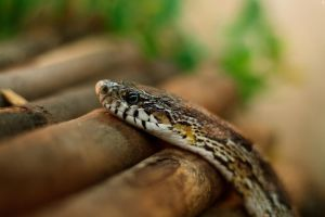 Little Snake by PenguinPhotography