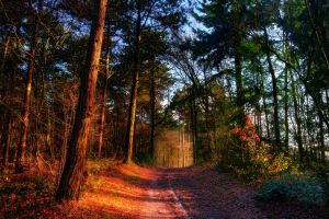 .: Woodland Way :. by syntheticdreamer