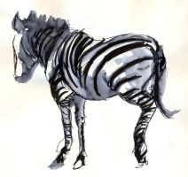 Zebra Standing by Sheenaza
