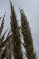 Long Grass by Clangston