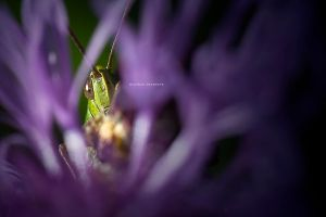 Hiding Place by DREAMCA7CHER