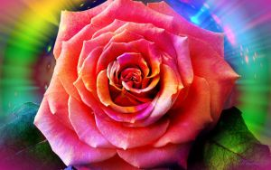 Rose in the magical glow. by Mladavid