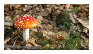 Fly agaric by Barefeet-in-the-rain