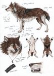 Saidy Wolf form Ref-Sheet by SaidyWolf