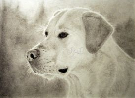 Yellow Lab by RavenStarStudio