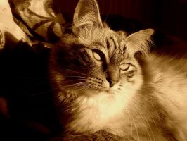 My Lovely Kitty by AKFid
