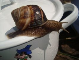 Snail on pan by WolfDemonG