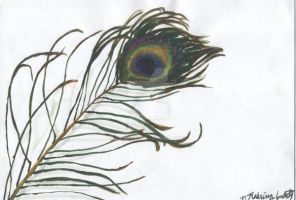Peacock Feather by Dhria