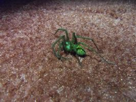 Big Green Scary Spider by StevenARTify
