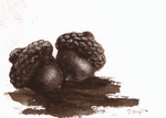 aceo acorns 2 by kailavmp