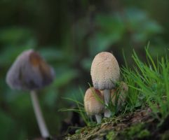 Mushrooms by HammerPhotography