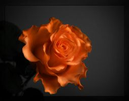 Rose for you by BPart