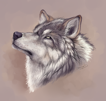 Realistic Wolf Head by Hainekami