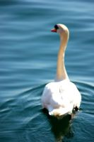Swan by CourageMyLove