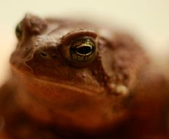 A Toad Eye by TwilitesMuse