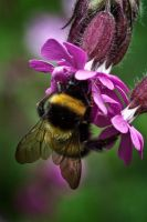Bee safe by CharmingPhotography