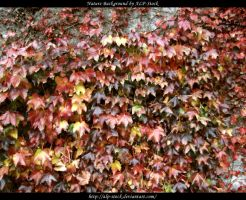 Colorful Autumn Leaves by ALP-Stock