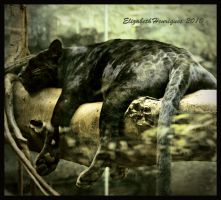 Sleeping Panther by mariquasunbird1