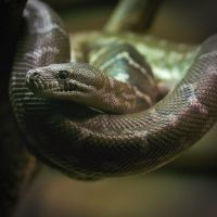 Posing snake by perost