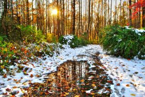 Snow in our Fall by RichardNohs