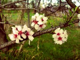 Blossom by heilin98