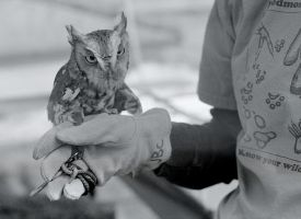 An Owl in Hand by captainslack
