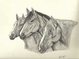 Three Horses by carriephlyons
