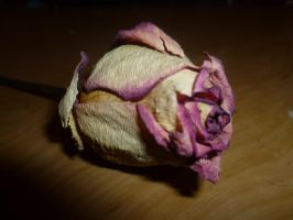 wilted beauty 2 by Tigress45