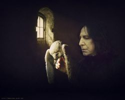 Severus Snape by Marcianca