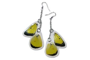 Real Yellow Sulfur Butterfly Wing Earrings by TheButterflyBabe