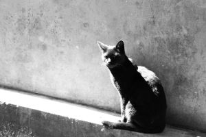 Nothing but my black cat. by sNiK7