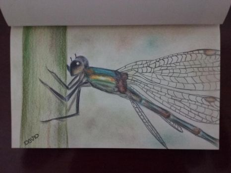 Liblula/Dragonfly by David-pr