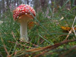 Fly-agaric by Wirikos