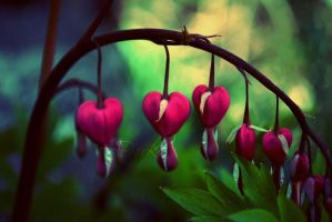 Bleeding Hearts by ReachForTheStarfish