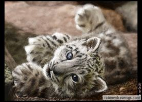 The snow leopard fell... by kamui1st