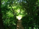 Path in Trees by Foxiwan