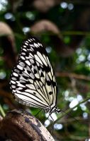 Butterfly by gee231205