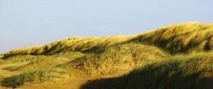 Dunes by 11-27
