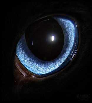 Eye by klaminus
