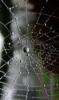 Web of life by indianserenade