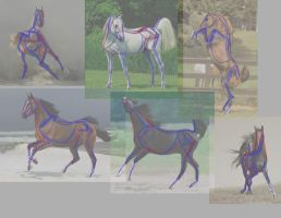 Horses Study 01 by CyberSnowBear