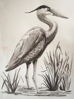 Great Blue Heron by LucasDurham