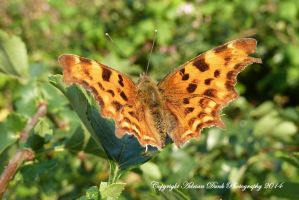 Comma. by AdrianDunk