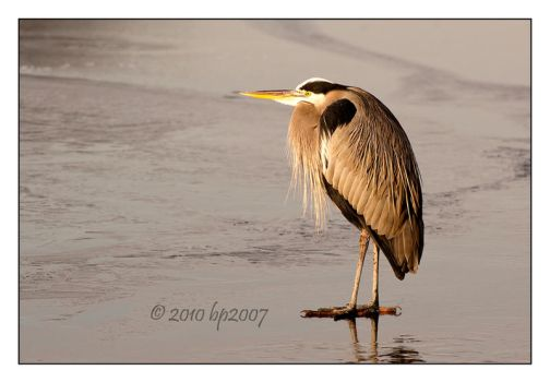 GBH - 3 by bp2007