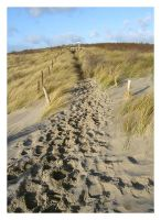 Duinen. by Ninoness