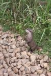 Otter begging by Tommys-Media