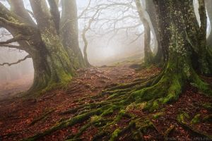 Like a Tim Burton's Movie by MaximeCourty