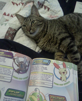 Me, A Pokemon Handbook, And A Cat Called Harrison by RYUUZAKIPLUSMISA