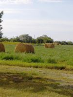 Stock 229 - Hay Field by pink-stock